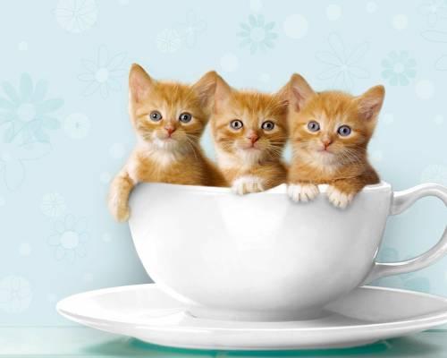 Красивые обои рыжие котята скачать