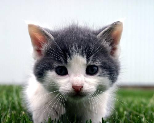 Красивые обои любопытный котик