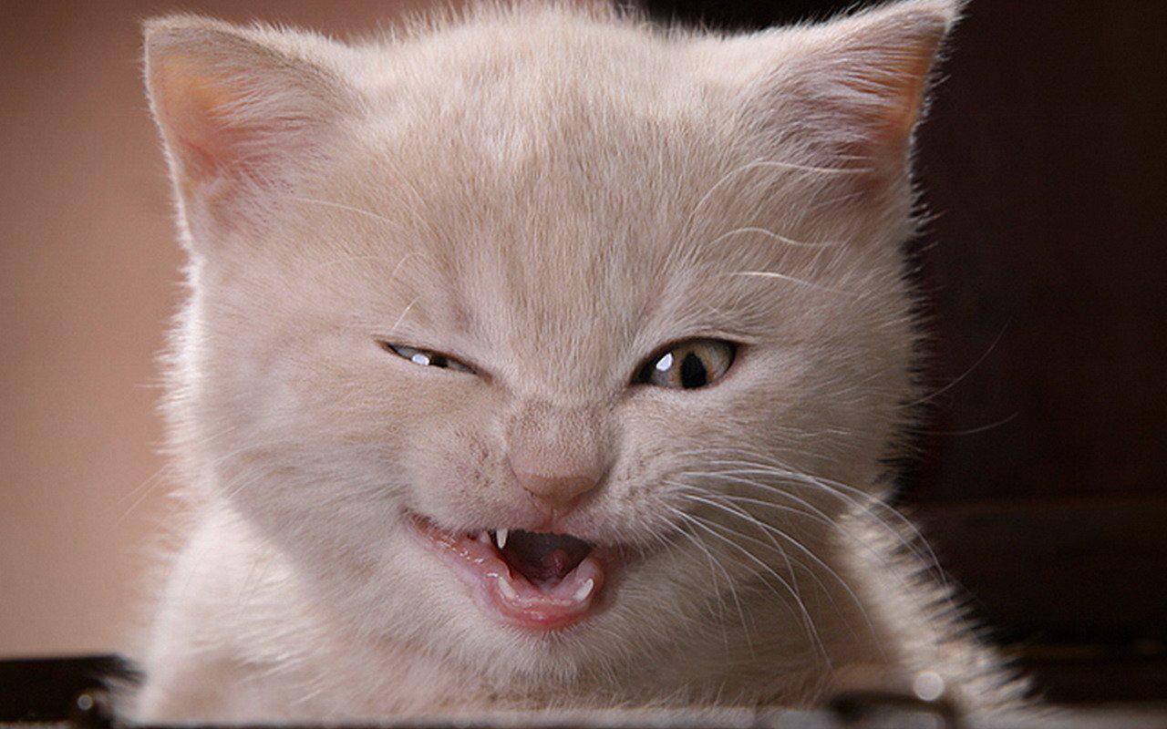 Наглая кошачья морда фото 647-244