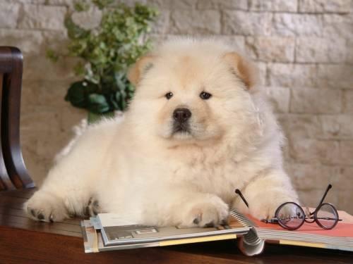 Красивые обои офисная собака скачать